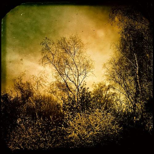 trees tree sweden iphone trollhättan iphone4 hipstamatic