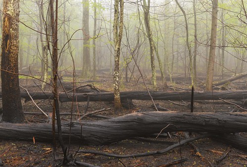 trees black green forest landscape outdoor forestfire charred shenandoahnationalpark rockymountainfire