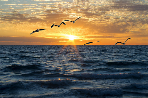 ocean life sunset sky beach pelicans water clouds pentax florida gulfcoast pentaxk30