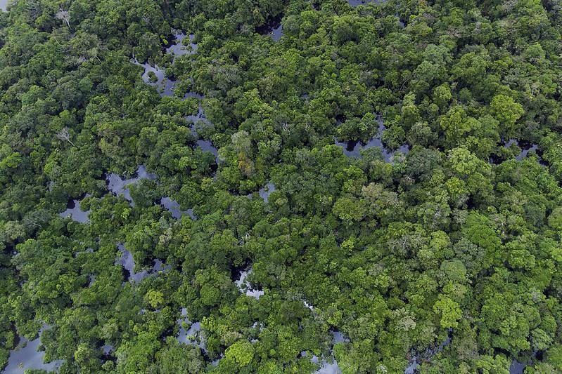 Selva inundada