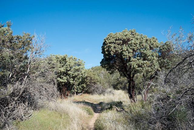 Lush trail, m320