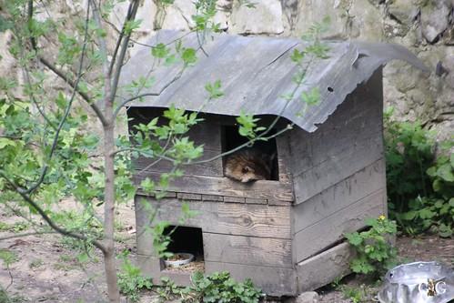 Zoo Bratislava 18.04.201588
