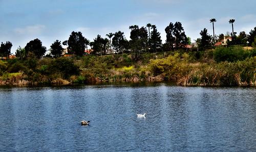california usa lake water unitedstates ducks oceanside guajome canonpowershots100