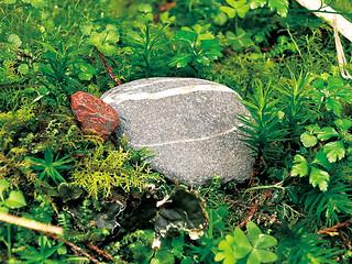 許願石把范欽慧帶到太平山上(遠流提供)