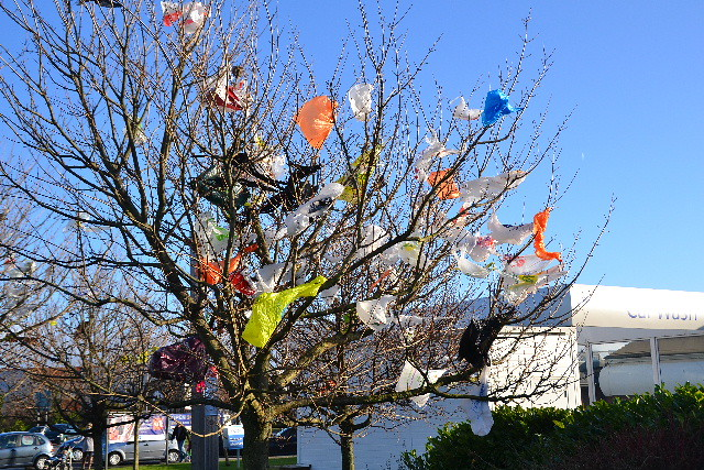plastic bags get in trees