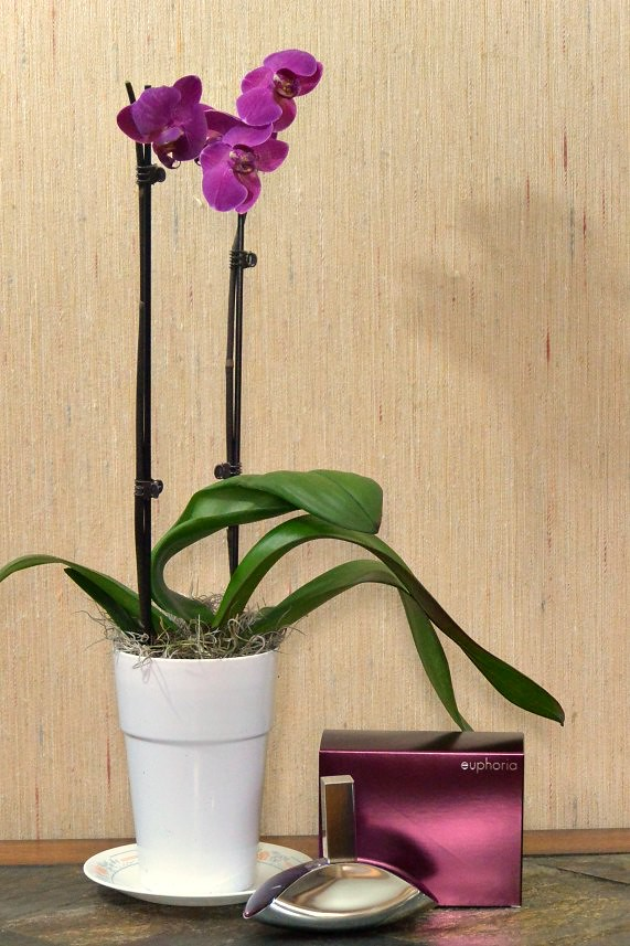 euphoria Calvin Klein - free orchid with large spray purchase at Dillard's