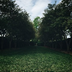 Many secrets are just a whisper away. #latergram #garden #forest #petals #grass #wilderness #arboretum #winchester #va #statue #explore #justgoshoot #shade