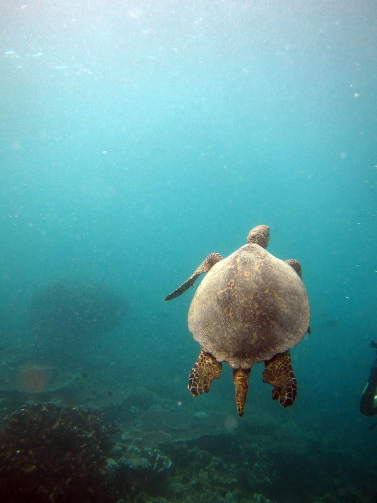 dykning i Malaysia