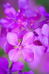 Spring Campus Flowers-15