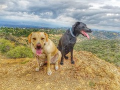 Otis and Pablo watching storm clouds roll over the Valley.