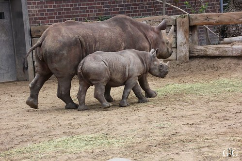 Oster-Montag im Zoo Berlin 06.04.201544