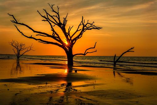 ocean morning trees sun beach water silhouette sunrise reflections bay spring sand south peaceful atlantic shore serenity carolina sunburst serene botany tranquil