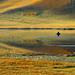 3133 Early autumn--Bashang grassland , China by ngchongkin