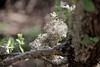 natural lacework