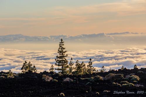 sunset mountain colour tree clouds landscape lava golden spain wolken tenerife teide gomera canaryisland canarischeeilanden teidebynight