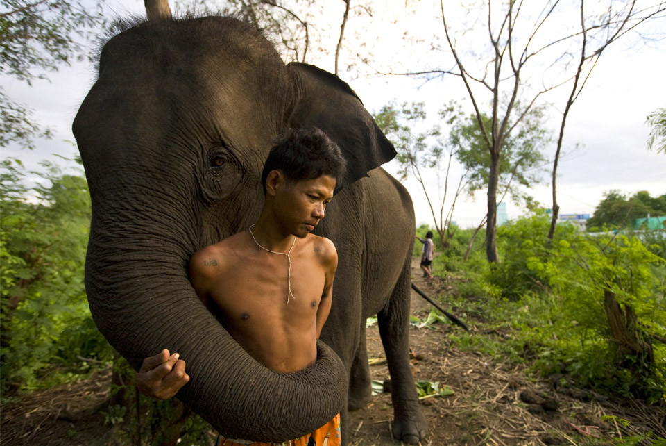 a-man-and-his-elephant