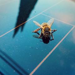 :honeybee: