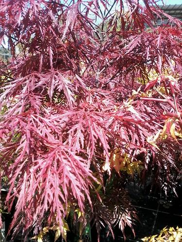 Pretty Japanese tree