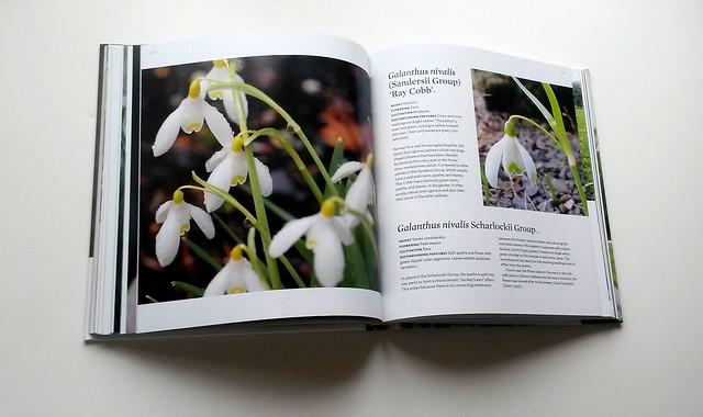 Snowdrops Book