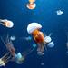 Jellyfish by phil dokas