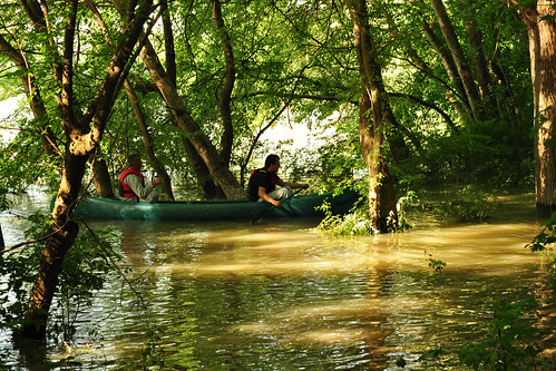 Mannheim Waldpark Rhein Schutzgebiet Naturschutzgebiet Überschwemmung Hochwasser Mai 2015 Fotos Brigitte Stolle