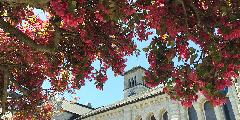 It's spring, and that means blossoming trees around Grant Hall!