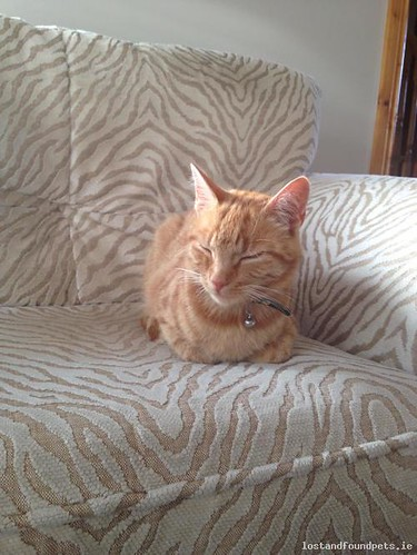 Fri, May 6th, 2016 Lost Male Cat - Bolacreen, Gorey, Wexford