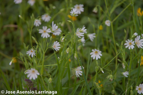 Primavera 2015 #DePaseoConLarri #Flickr -039