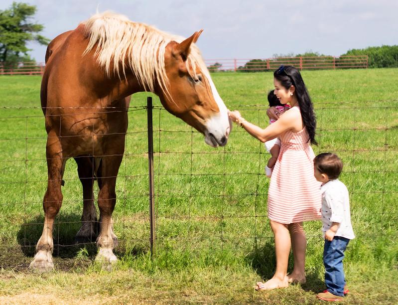 cute & little blog   petite fashion   ennis tx horse farm