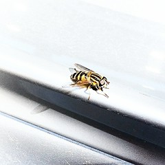 I took this at the gas station on the back of my car... looks like a fly with the colours of a bee or wasp. Anyone know what this is?