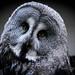 owl (1 of 1) by georgeboucher101
