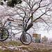 DS7_1466.jpg by d3_plus