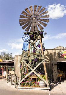 Knott's Windmill With Boysenberry Vines