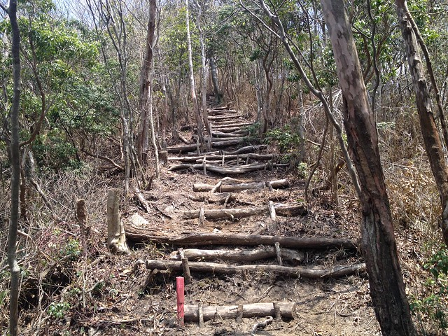 釈迦ヶ岳 中尾根登山道 丸太階段