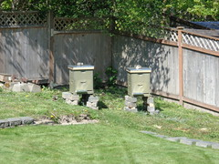 Empty Hives at the Ready