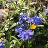 Forget-me-nots #garden