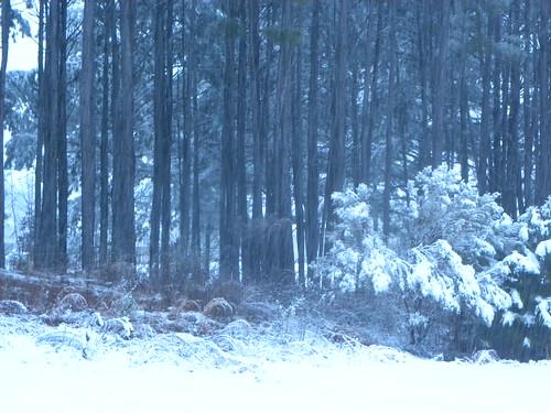snow nature georgia locustgrove heronbaygolfcountryclub