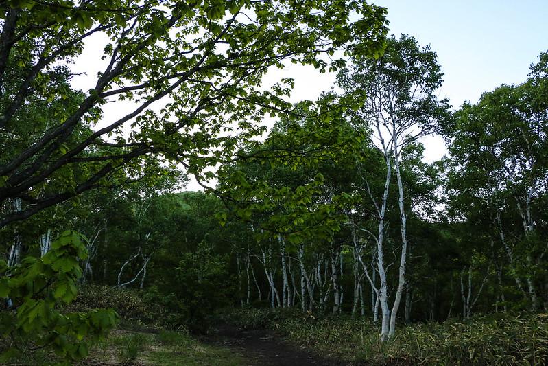 2014-06-15_00200_四阿山.jpg