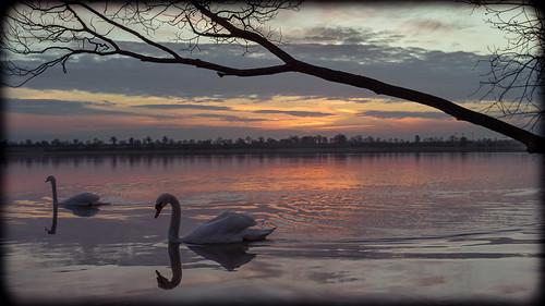 sunset lake water germany deutschland see swan wasser sonnenuntergang 28mm swans schwan schwäne kiron klingberg pönitzer