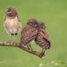 Three Chicks on a Stick by MyKeyC