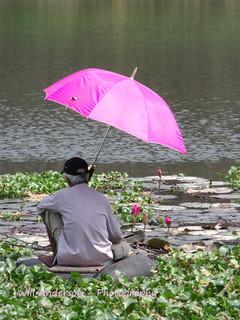 Pink Umbrella - Hue - VIETNAM
