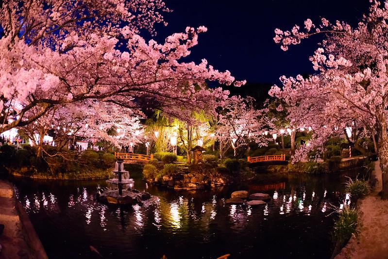 打吹公園 桜-23