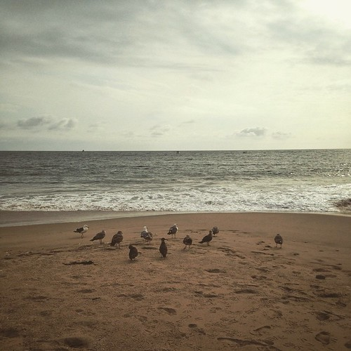 What's up, sea birds?