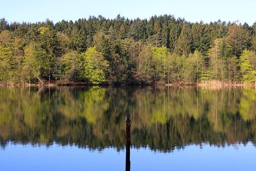 trees lake reflection landscape outdoor træer serene sø noplacelikehome spejling almindsø søhøjlandet
