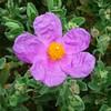 Petite fleur de balade....
