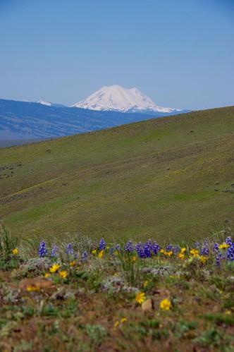 ヤキマのコースは周りに視界を遮るものなし。レーニエ山を望みます。