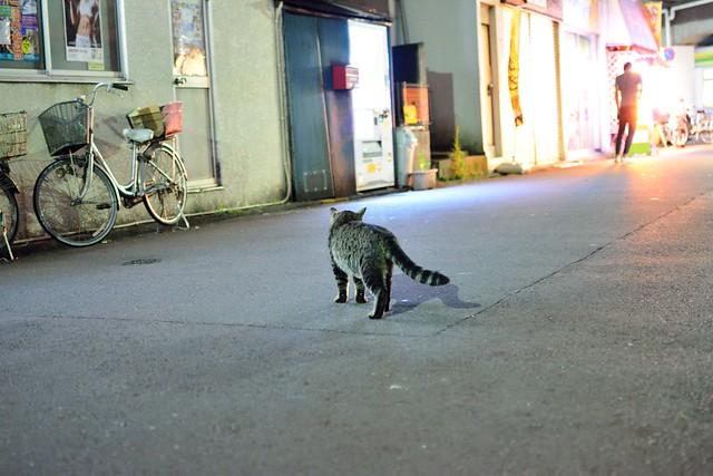 夜のネコ3