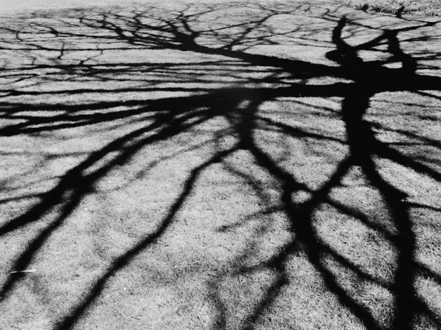 shadow from tree branches