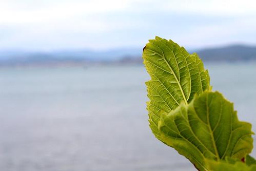 tree green nature leaves landscape leaf