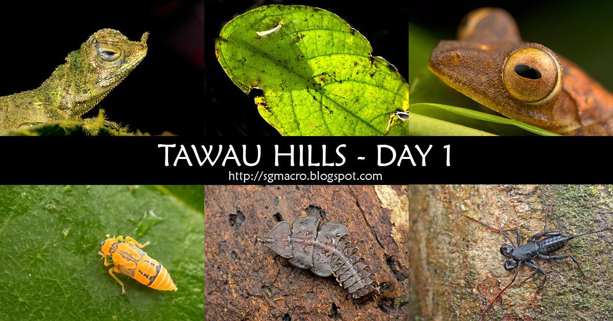 Tawau Hills - Day 1